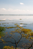 Loktak Lake, with fish traps