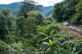 As the road descends, the forest becomes distinctly tropical