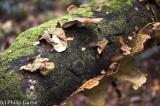Fungi on a tree trunk, Maits Rest, Cape Otway