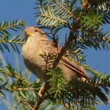 Golden Birds 20130906 301 Backyard in 2013.JPG