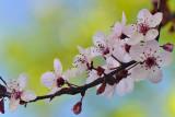 Spring Has Sprung 2014