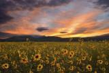Flagstaff Wildflowers
