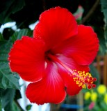 my_summer_garden_flowers_2015