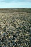 Tundra south of Mount Pelly - Toendra ten zuiden van Mount Pelly