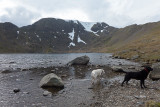 Red tarn, with dogs