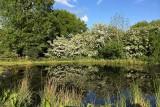 May 14 - Pond