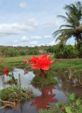 Pond and flower