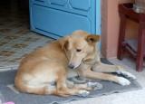 Simba, a lovely dog!