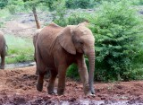 David Sheldrick's Wildlife Trust