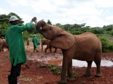 feeding time at David Sheldrick's Wildlife Trust