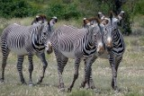 Samburu National Reserve May 21, 2013