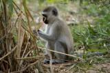 Samburu National Reserve May 22, 2013