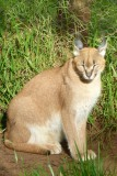 Samburu  to Mt. Kenya Safari Club, May 23, 2013