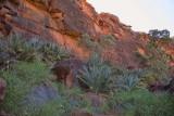Palm Valley, Northern Territory, Australia