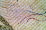 Micro-6-4.jpg