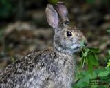 _MG_9573_Rabbit.jpg