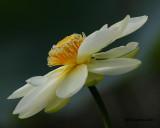 _MG_0221_Lotus.jpg
