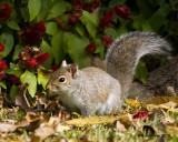 _MG_3713_Squirrel.jpg