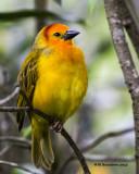 audubon_zoo