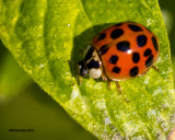 5F1A2220_Ladybug.jpg