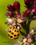 5F1A2407 Ladybug.psd