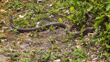 5F1A6704 snake.jpg