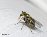 5F1A2638 Green fly.jpg
