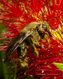 5F1A4267 Bee.jpg