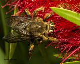 5F1A4271 Bee.jpg