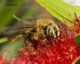 5F1A4288 Bee.jpg