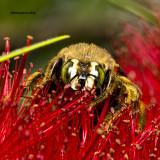 5F1A4289 Bee.jpg