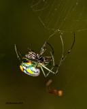 5F1A9869 Venusta Orchard Weaver.jpg