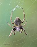 5F1A0561 spider 3.jpg