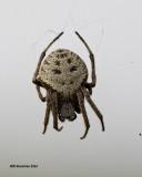 5F1A0567 spider 2.jpg