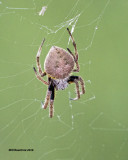 5F1A0573 Spider.jpg