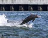 5F1A3222 Dolphin.jpg