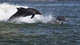 5F1A3225 Dolphins.jpg