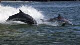 5F1A3226 Dolphins.jpg