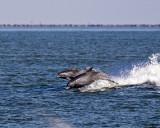 5F1A1830 Dolphins.jpg