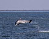 5F1A1834 Dolphin.jpg