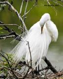 _MG_9606 Great Egret.jpg