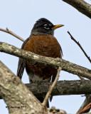 5F1A6744 Robin.jpg
