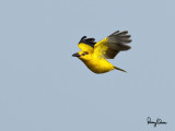 Some birds from Rosario (Batangas)