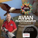 Avian Photography Session - BGC, Philippines, May 28, 2016