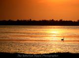Water Bird in Mayakka River state park, Florida.jpg