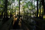 Walkway-Manatee Springs