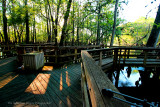 Boardwalk-Manatee Springs-web.jpg