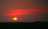 Sunset over canopy-Myakka River State Park