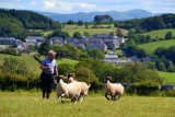 Sheep Dog Trials 2015