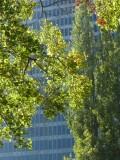Sue Bierman Park